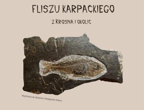 """""""Skamieniałości fliszu karpackiego z Krosna i okolic"""" ze zbiorów Grzegorza Salwy"""