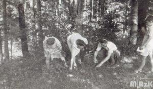 Kilka osób zbiera grzyby w lesie