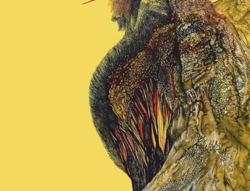 """""""Piórkiem rysowane"""" – wystawa rysunku Stanisławy Olszańskiej-Marszałek  w Piwnicy PodCieniami"""